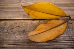 Autumn concept Stock Image