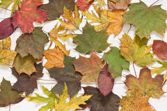 Autumn leaves. Autumn wooden background with leaves Royalty Free Stock Photo