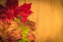 Autumn leaves on wooden background Stock Images