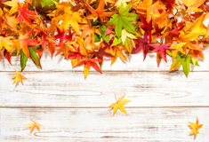 Autumn leaves on wooden background Royalty Free Stock Images