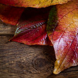 Autumn  leaves. On a wooden background close up Stock Image