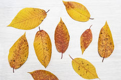 Autumn leaves. On wooden background close up Stock Photos