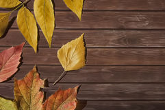 Autumn leaves. On wooden background close up Stock Image