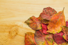 Autumn leaves on wooden background. Colored autumn leaves on wooden background Royalty Free Stock Images