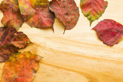 Autumn leaves on wooden background. Colored autumn leaves on wooden background Stock Photography