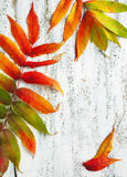 Autumn leaves on the wooden background Royalty Free Stock Photo