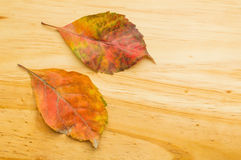 Autumn leaves on wooden background. Detail of two autumn leaves on wooden background Stock Photos