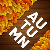 Autumn leaves on wooden background. Illustration of Autumn leaves on wooden background Royalty Free Stock Photography