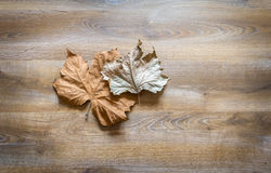 Autumn leaves in a wooden background Royalty Free Stock Image