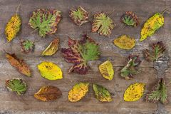Autumn leaves on a wooden background planks with scattered colorful autumn leaves various colors Stock Photo