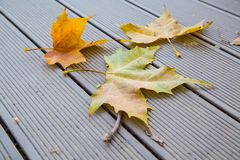 Autumn leaves on the wooden bench Royalty Free Stock Photo