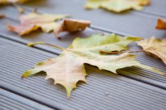 Autumn leaves on the wooden bench Stock Images