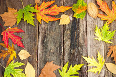 Autumn leaves on wooden board Stock Images