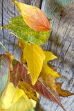 Autumn leaves on wooden board Stock Photography