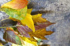 Autumn leaves on wooden board Stock Photos