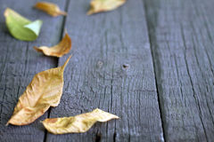 Autumn leaves on wooden boards Royalty Free Stock Photo