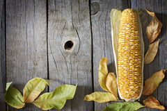 Autumn leaves on wooden boards with corn Stock Images