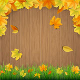 Autumn leaves wooden boards  and green grass Stock Image