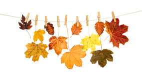 Autumn leaves on a wooden clothespin Stock Photography