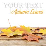 Autumn leaves on wooden floor Stock Photos