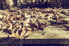 Autumn leaves on a wooden surface (soft focus). Cross processed. Image for vintage look. shallow depth of field Royalty Free Stock Photography