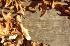 Autumn leaves on a wooden surface (soft focus). Cross processed. Image for vintage look. shallow depth of field Stock Photo