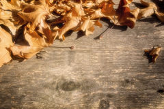 Autumn leaves on a wooden surface (soft focus). Cross processed Stock Photography