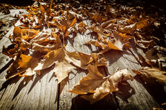 Autumn leaves on a wooden surface (soft focus). Cross processed Royalty Free Stock Photography