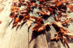 Autumn leaves on a wooden surface (soft focus). Cross processed. Image for vintage look. shallow depth of field Stock Photos