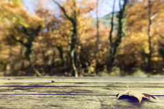 Autumn leaves on a wooden surface (soft focus). Cross processed. Image for vintage look. shallow depth of field Royalty Free Stock Image