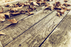 Autumn leaves on a wooden surface (soft focus). Cross processed Royalty Free Stock Photo