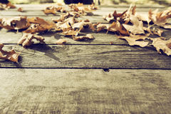 Autumn leaves on a wooden surface (soft focus). Cross processed. Image for vintage look. shallow depth of field Royalty Free Stock Photos