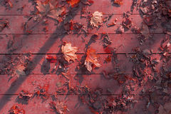 Autumn leaves on wooden surface Royalty Free Stock Image