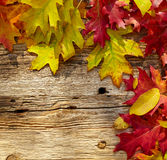Autumn leaves on a wooden table. Stock Images