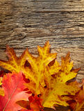 Autumn leaves on a wooden table. Royalty Free Stock Image