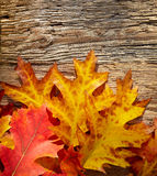 Autumn leaves on a wooden table. Royalty Free Stock Photo