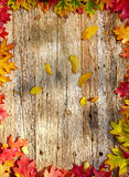 Autumn leaves on a wooden table. Stock Image