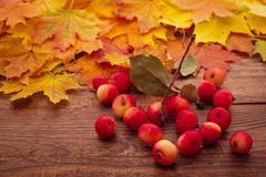 Autumn leaves on wooden table. Fruits and Royalty Free Stock Photos