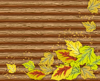 Autumn leaves. On wooden wall background Stock Images