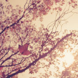 Autumn leaves woods forest vintage Stock Photo