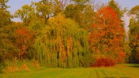 Autumn Leaves Woods Landscape 2019 royaltyfria foton