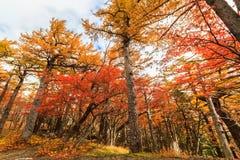 Autumn Leaves Woods Landscape Imagen de archivo