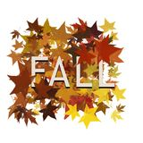 Autumn leaves with the word fall isolated on white Stock Images