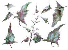 Autumn leaves wormwood silver tarragon. Set Of Autumn leaves wormwood silver tarragon vector illustration