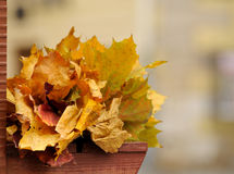 Autumn leaves. Wreath of yellow leaves on the bench Stock Photos
