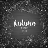 Autumn leaves written with chalk on black chalkboard Stock Photography