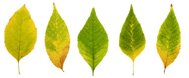 Autumn leaves, yellow, brown, red and green Royalty Free Stock Photo