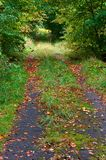Autumn, leaves, yellow, drops, grass, trail, wet. Wet autumn weather with deciduous trees leaves autumn Royalty Free Stock Image