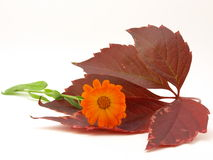 Autumn leaves and yellow flower Stock Photo