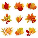 Autumn leaves yellow foliage vector set Royalty Free Stock Photo